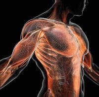Ryan Hughes Muscle Matrix Solution
